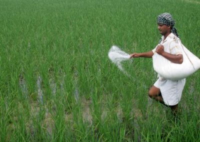 Fertilizer Subsidy: A Brief Profile